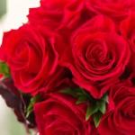 (2017)ホワイトデーの贈り物・喜ばれる花の色と本数の花言葉