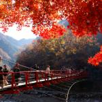2018【愛知県】紅葉狩り名所マップ&おススメスポット/その他情報まとめ