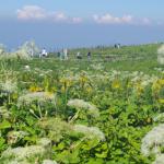 【伊吹山散策と琵琶湖・多景島クルーズ】霧と雨と風の日帰り旅行記