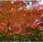 2018【東山動植物園】もみじ祭りいつから?見所・アクセス&ライトアップ