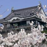 2017愛知県 桜の開花情報&お花見名所やおススメ穴場スポット15選