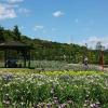 2017豊橋「賀茂しょうぶ園」へ行ってみよう!花の見頃や行き方&周辺スポット