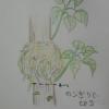 育ち過ぎたグリーンを小さくする方法「取り木」の簡単なやり方と注意点