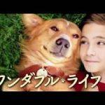 「僕のワンダフル・ライフ」ネタバレ感想・犬の演技に注目!キャストや評価も