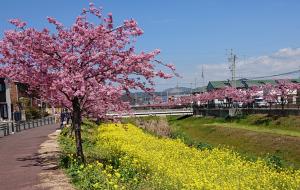 2019-03-05_161503